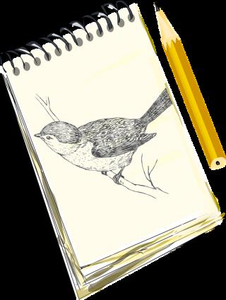 madár rajz